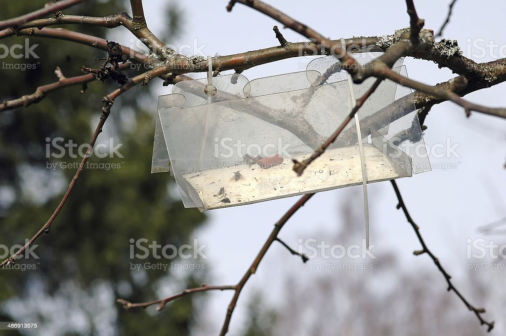 trap for catching insects stock photo