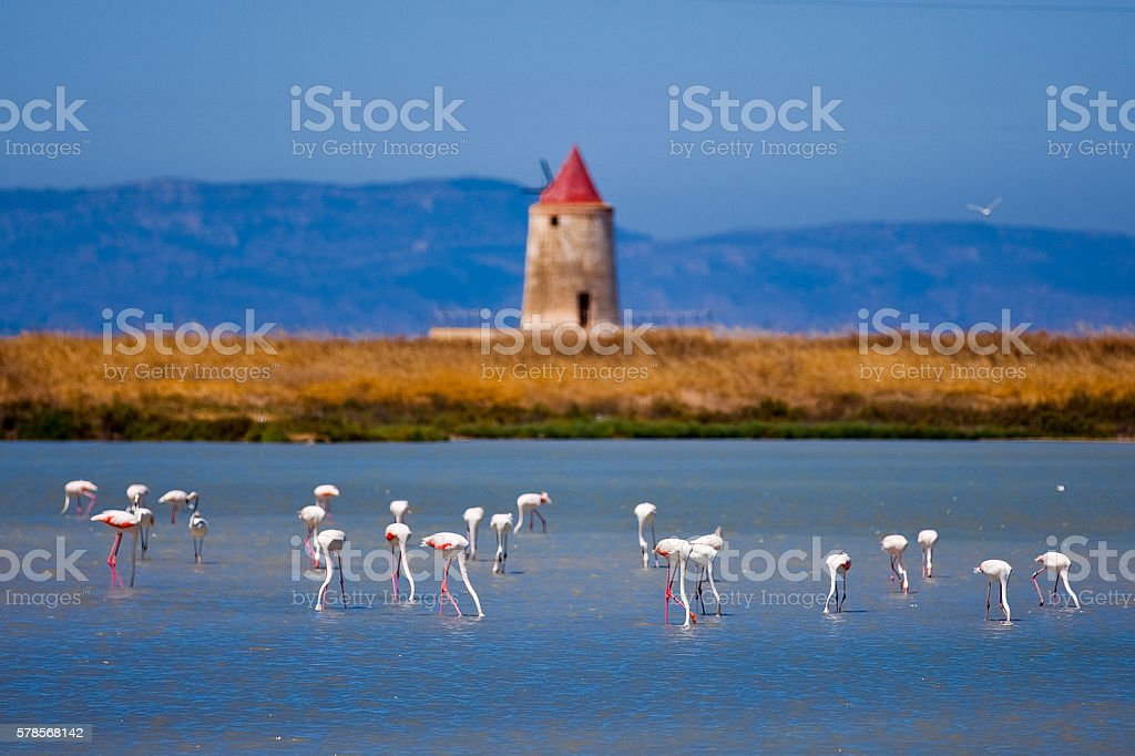 22/07/2016 Trapani  Sicilia  Italia  pink flamingos  saline stock photo