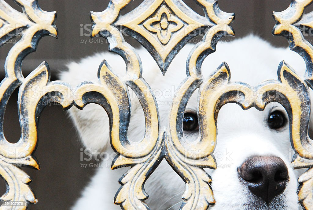 Trapped Dog stock photo
