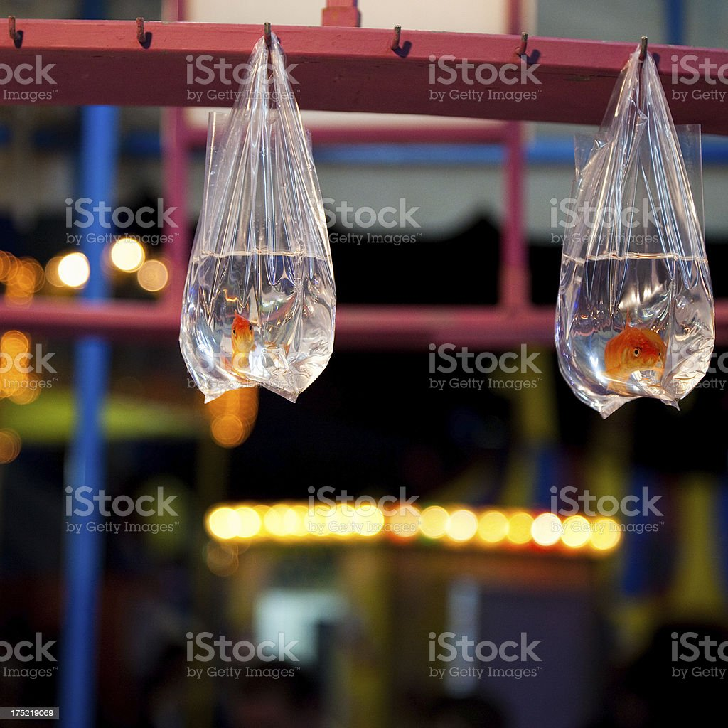 Trapped Fish royalty-free stock photo