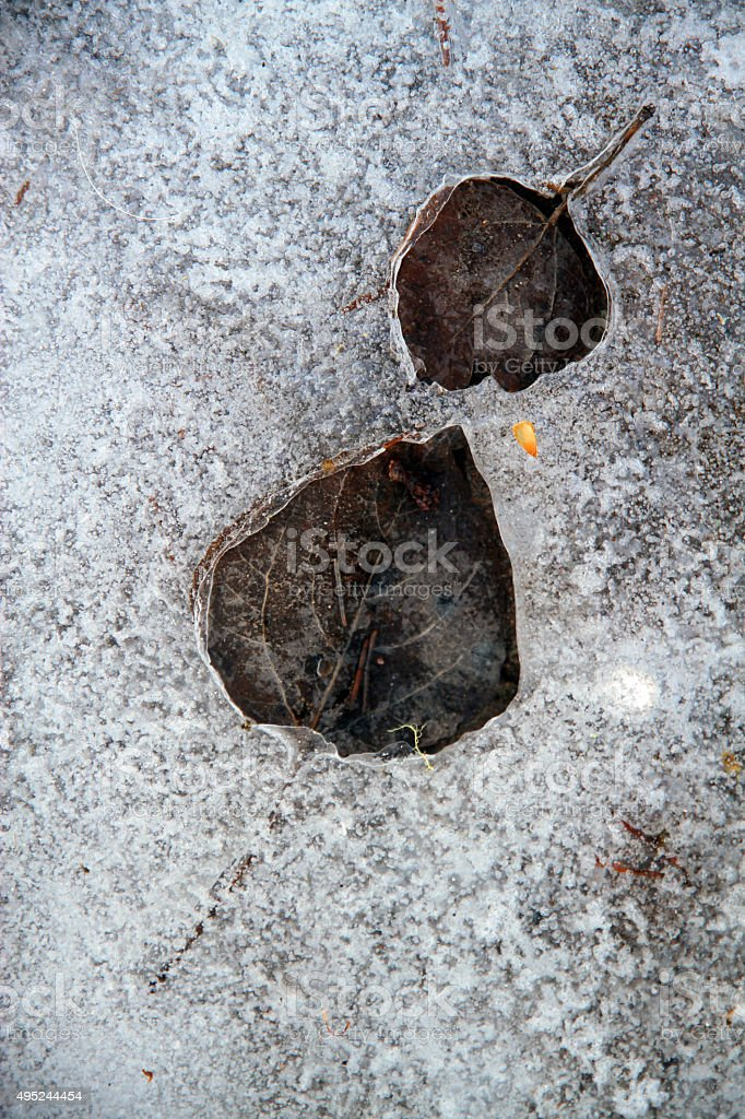 Trapped in the Ice stock photo