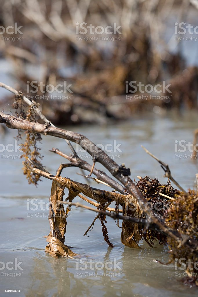 Trash caught up in the marsh royalty-free stock photo