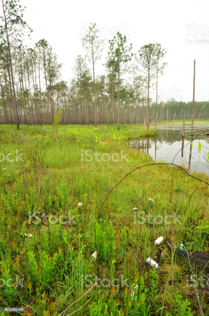 Trash on lakeside wetland with pitcher plants stock photo