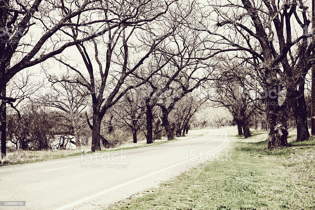 Travel: Country road lined with beautiful old trees. Texas, USA. stock photo