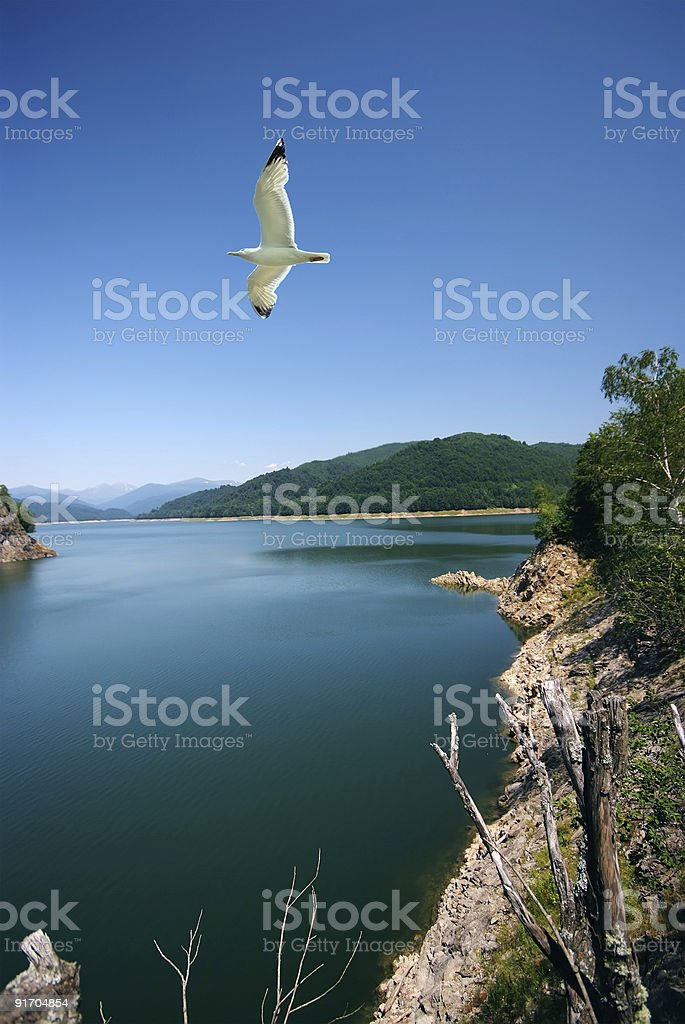 Travel destination and seagull royalty-free stock photo