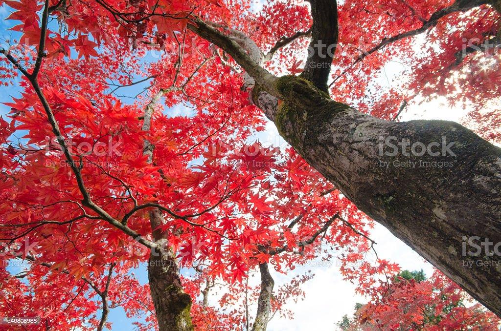 travel japan in autumn season stock photo