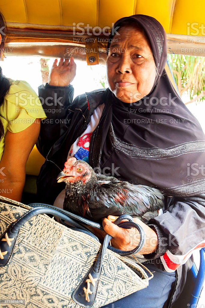 Travel with chicken stock photo