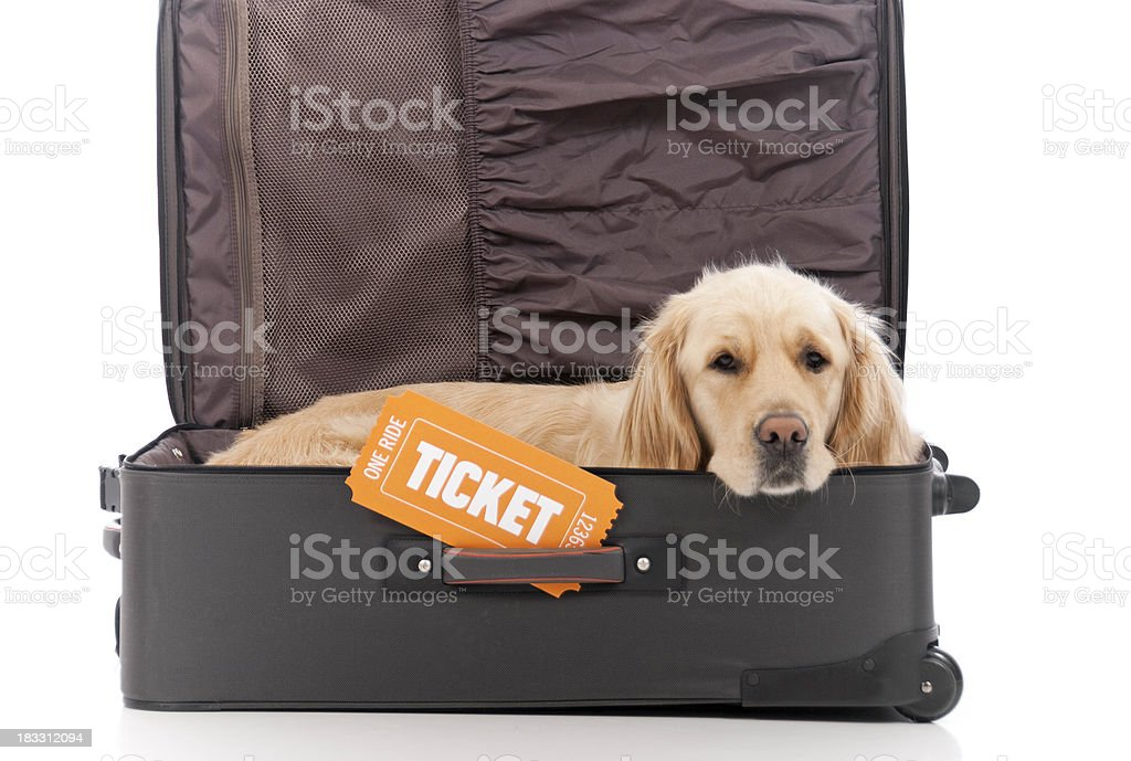 Travel With Dogs royalty-free stock photo