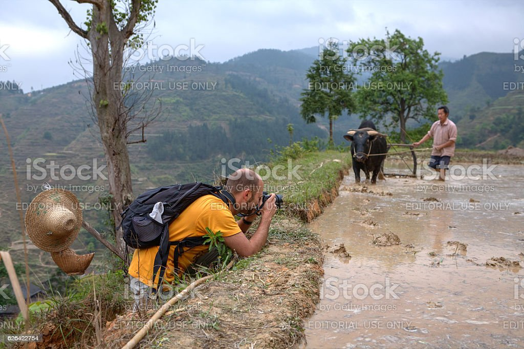 Traveler photographed chinese farmer with buffalo on the rice  fields. stock photo
