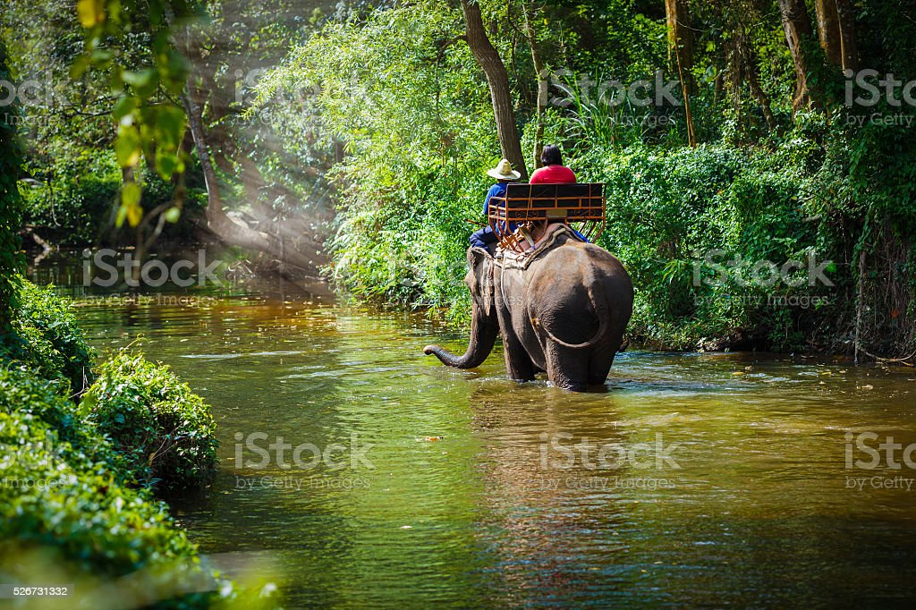 Traveler riding on elephants stock photo