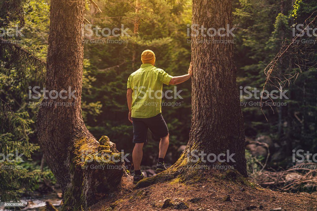 Traveler solitude in the forest stock photo