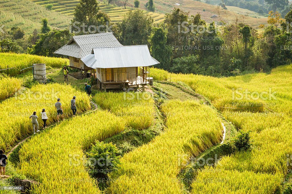 traveler walking to house in the rice field stock photo