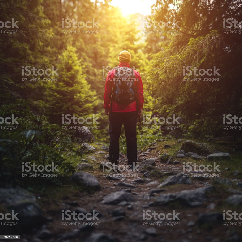 Traveler with backpack stands on a trail in forest stock photo