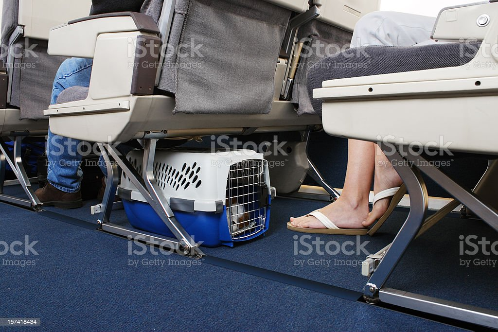 Traveling With Pet On Airplane royalty-free stock photo