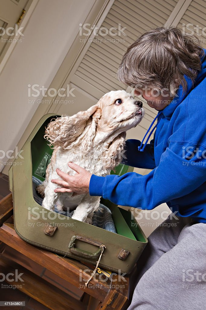 Traveling With Your Dog stock photo