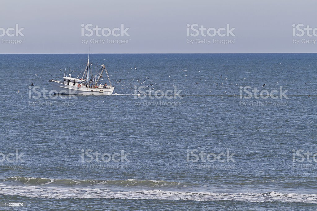 Trawler and Hungry Seabirds stock photo