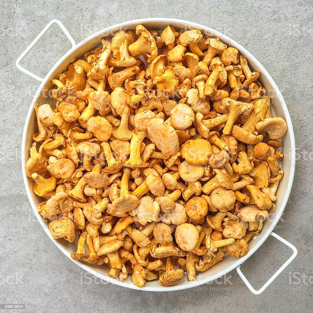 Tray with chanterelle mushrooms stock photo