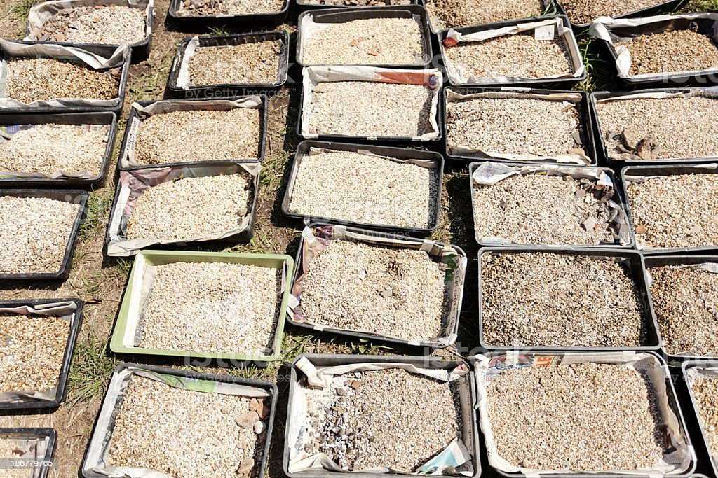 Trays of soil samples stock photo