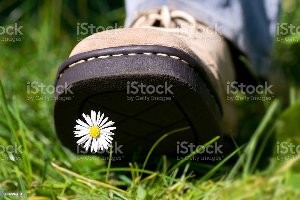Treading on a daisy royalty-free stock photo