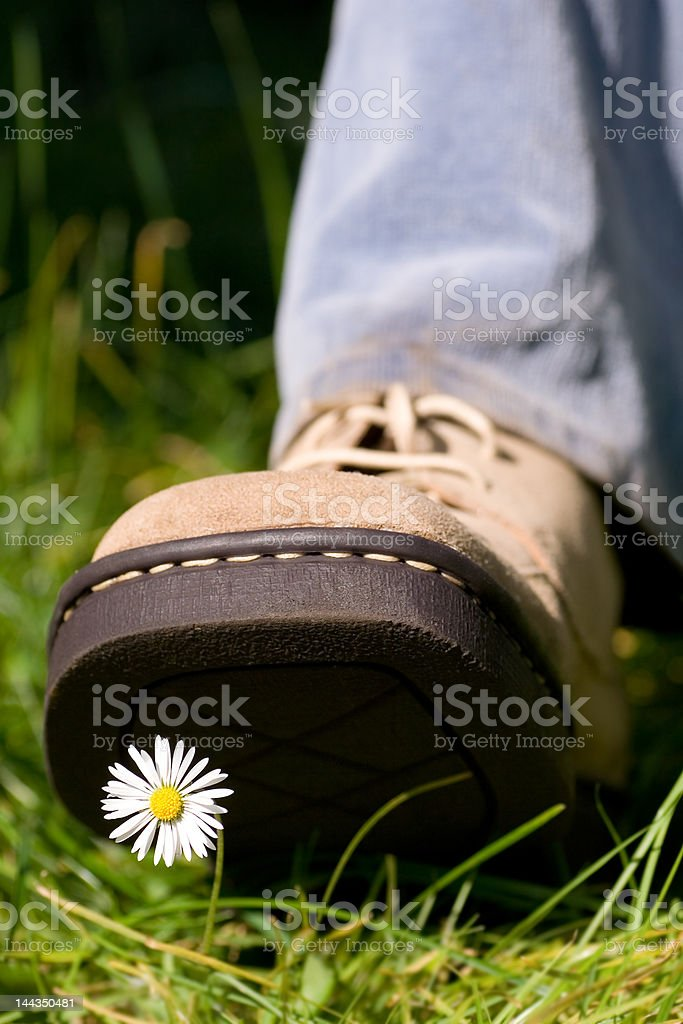 Treading on a daisy stock photo