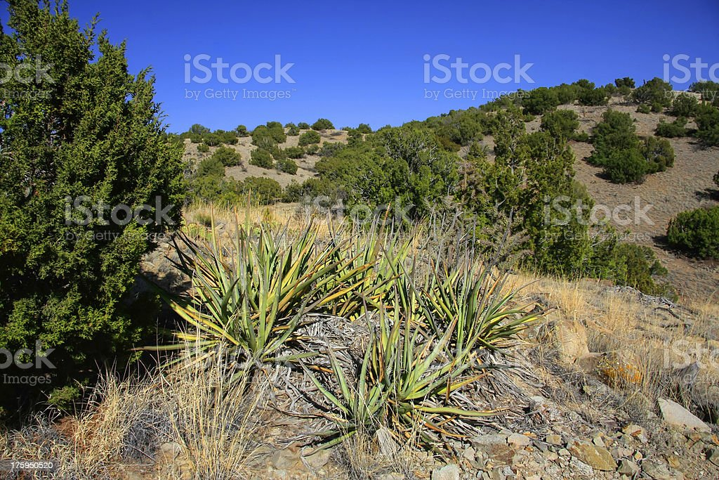 Treasures of New Mexico stock photo
