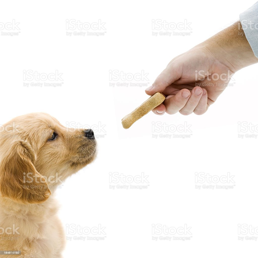 Treat for puppy stock photo