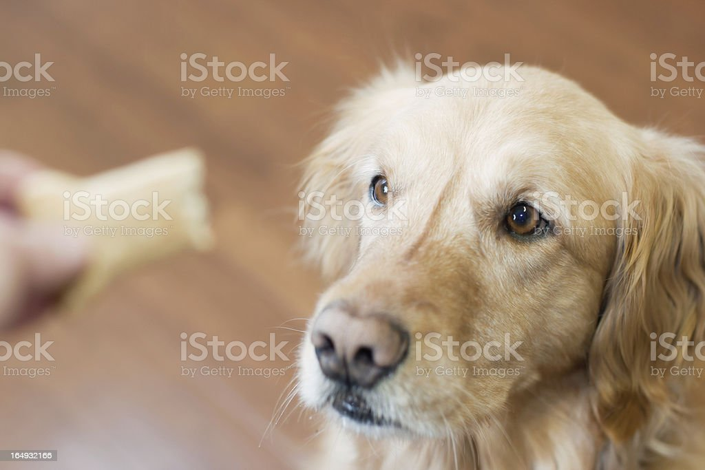 Treat time, dog training stock photo