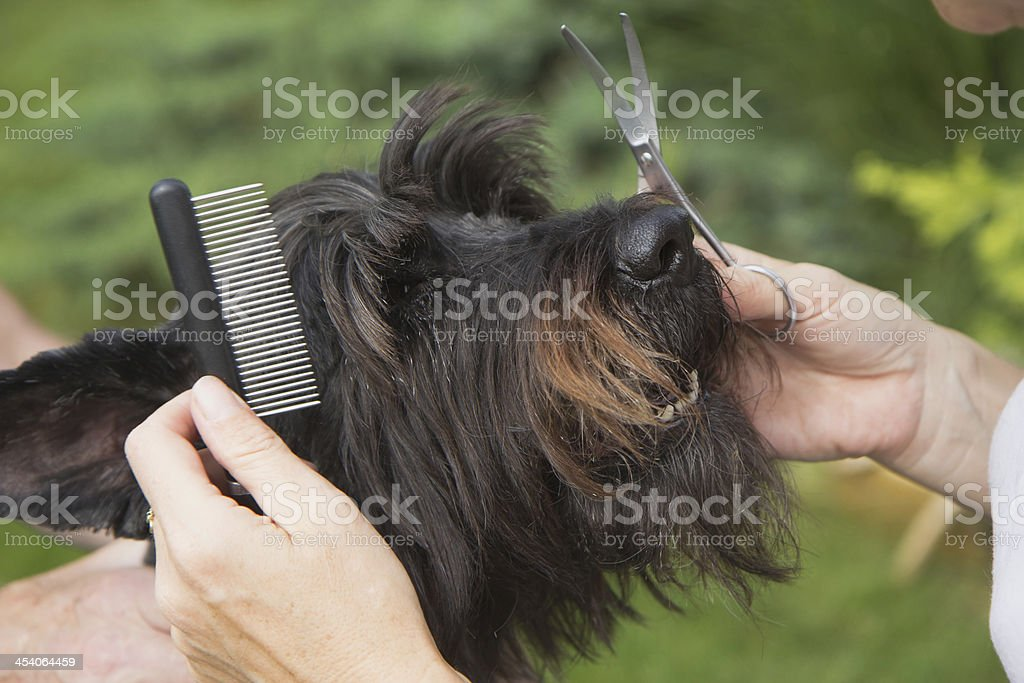 Treatment dog's head by crest stock photo