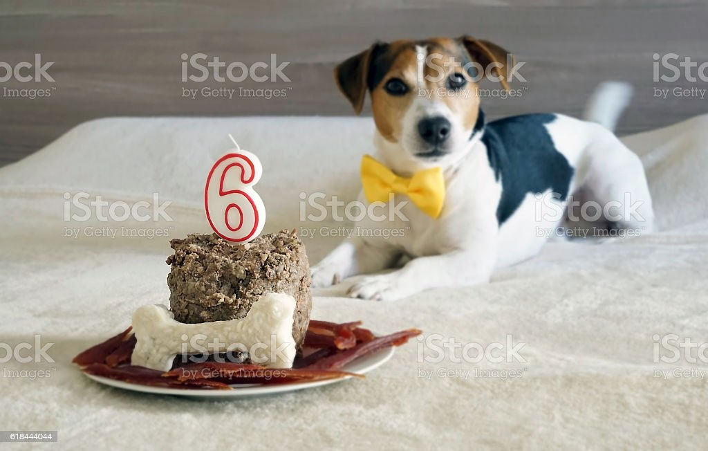 Treats for dog pet on his sixth birthday. Selective focus stock photo