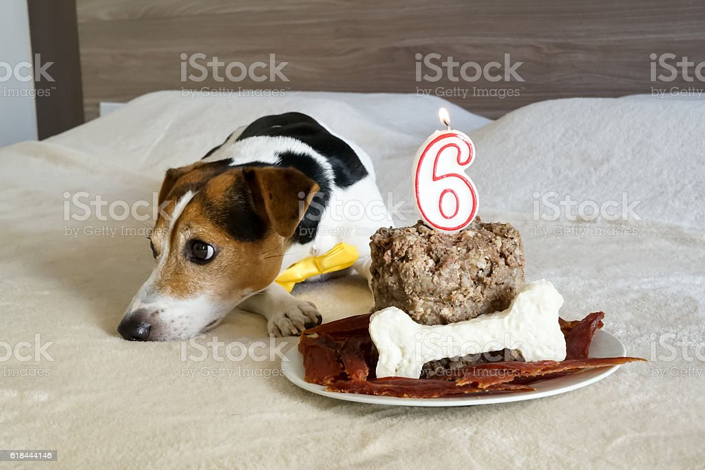 Treats for the dog on his birthday stock photo