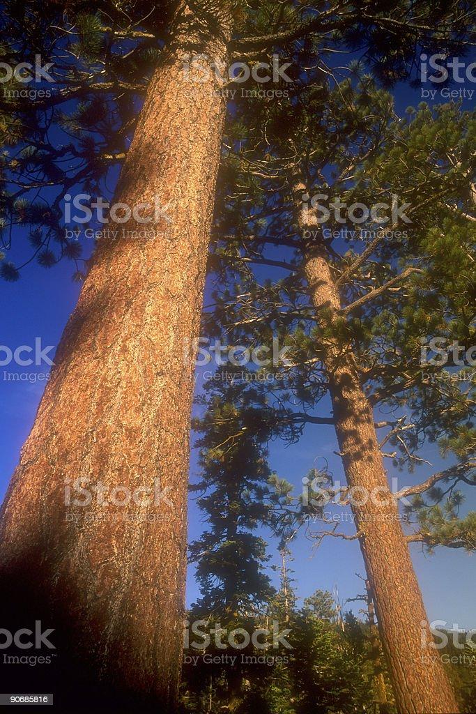 Tree 11 royalty-free stock photo