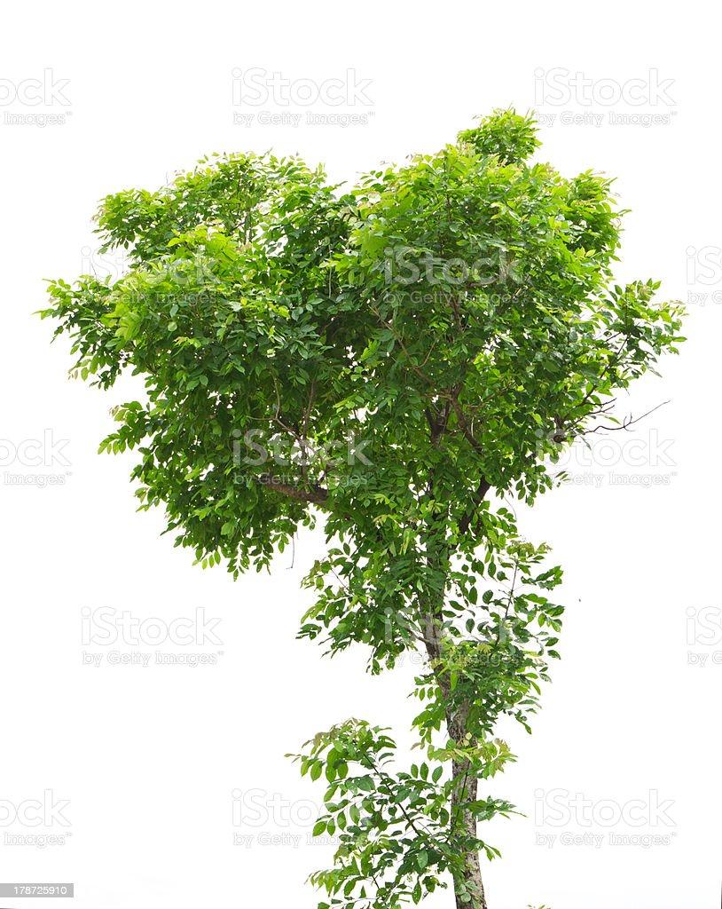 tree 4 stock photo