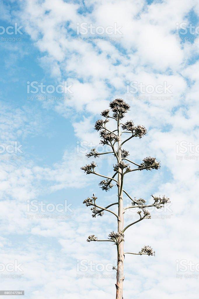 árbol contra cielo stock photo