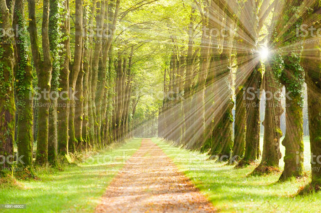 tree alley at spring stock photo
