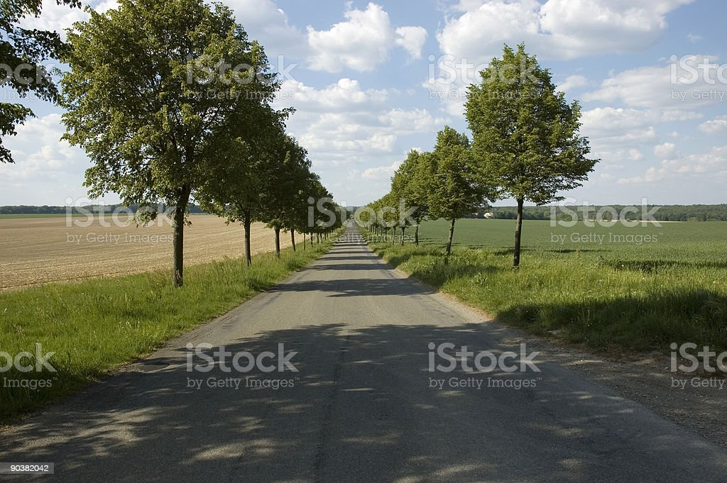 tree alley in beautiful spring landscape royalty-free stock photo