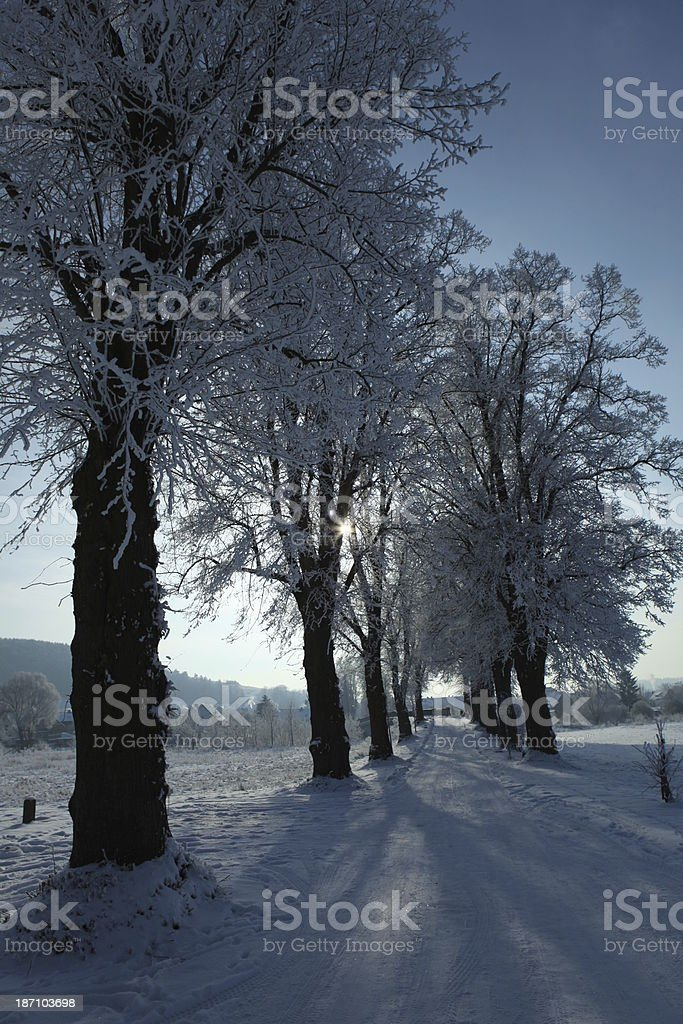 Baumallee im Winter stock photo