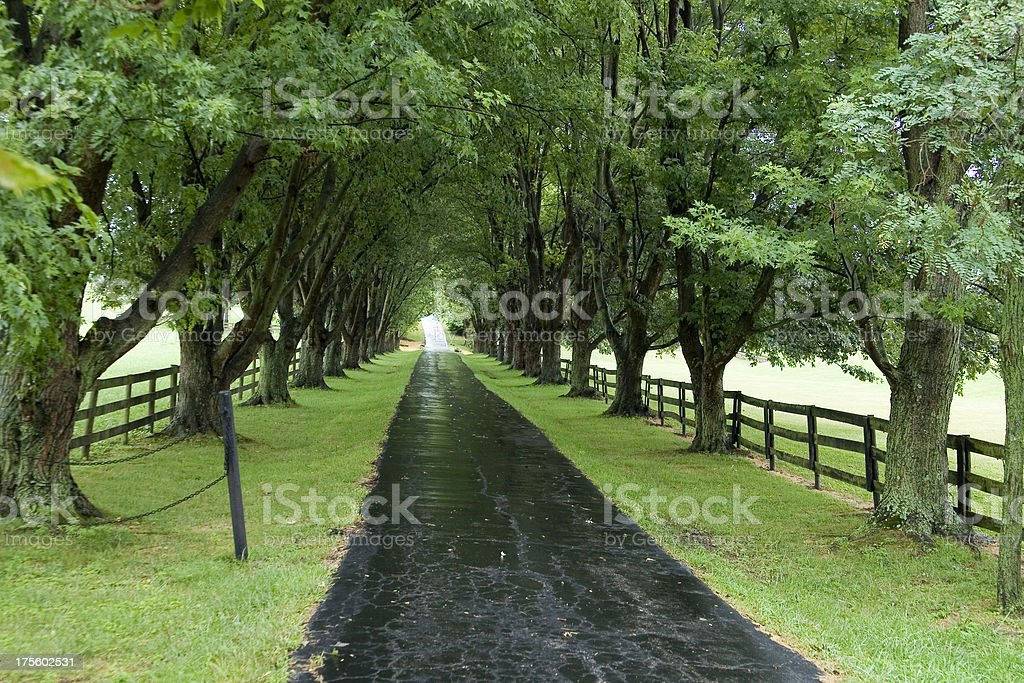 Tree alley royalty-free stock photo