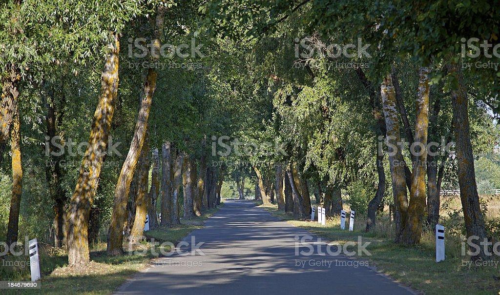Tree Alley royalty-free stock photo