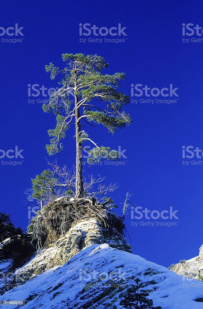 tree alone royalty-free stock photo