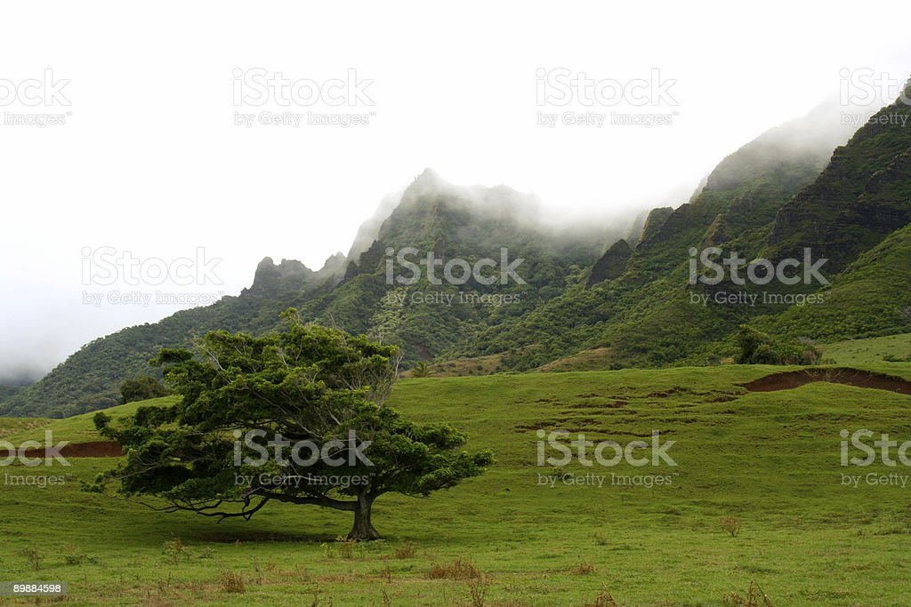 Tree Amidst The Mountains royalty-free stock photo
