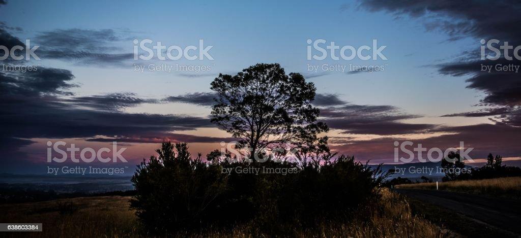 Tree among the bushes stock photo