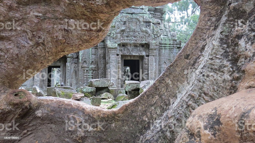 Tree amongst the ruins royalty-free stock photo