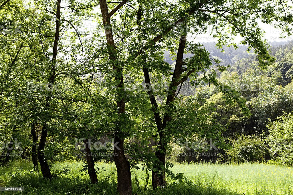 tree and beautiful flowers royalty-free stock photo