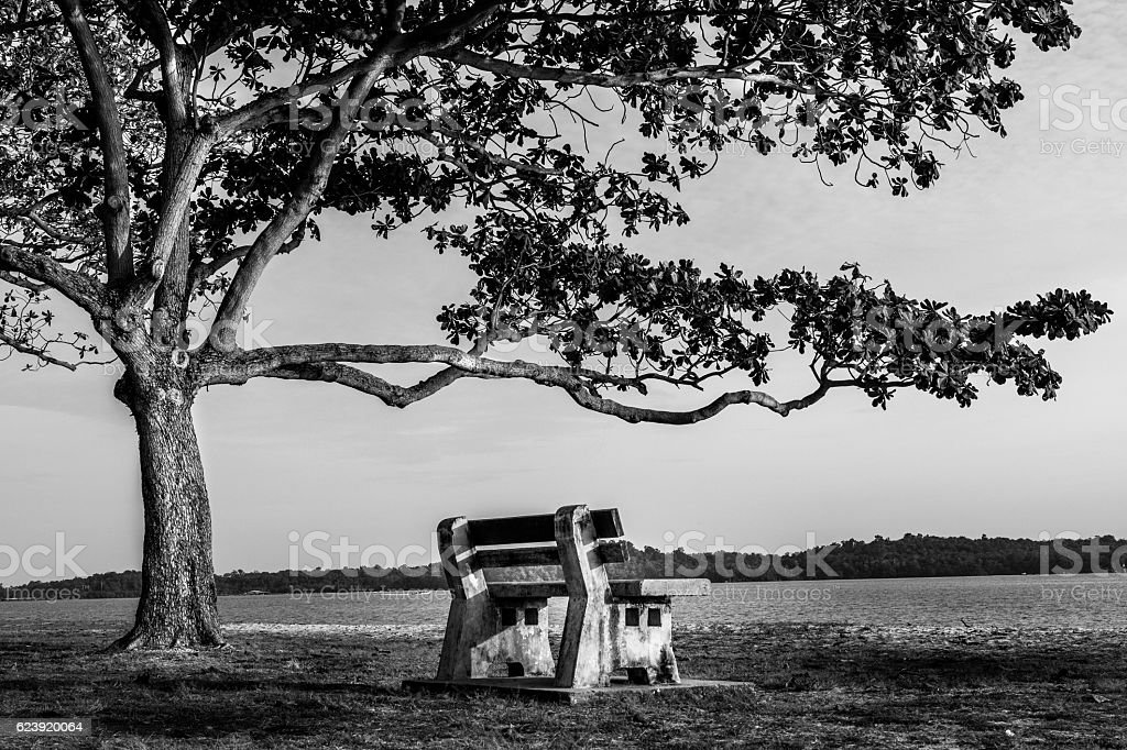 Tree and Bench at beach stock photo