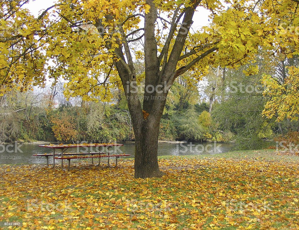tree and bench in fall royalty-free stock photo