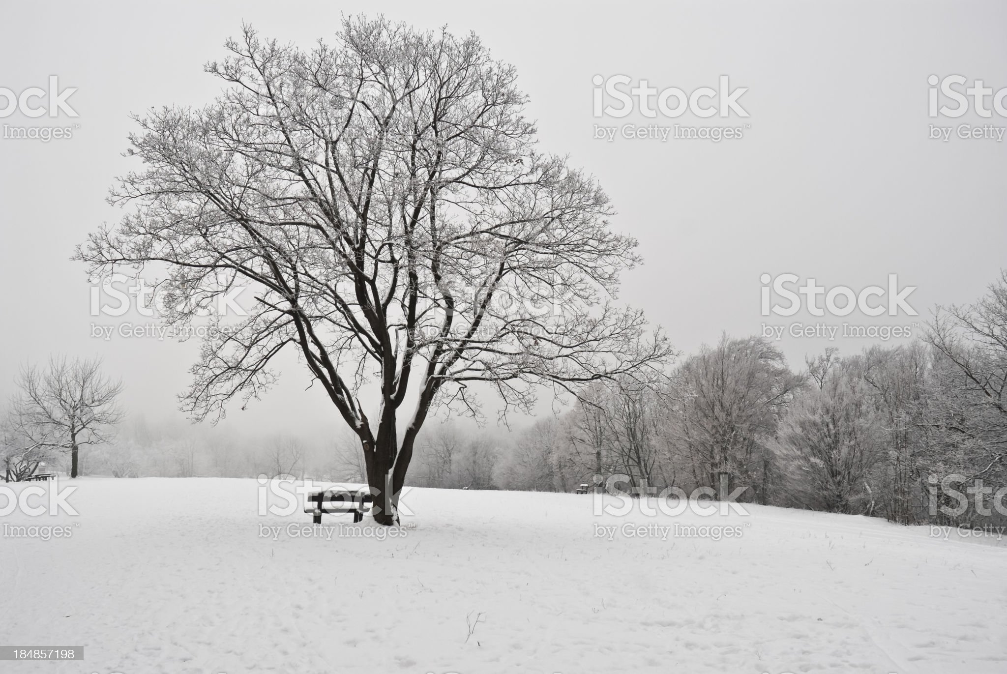 Tree and Bench in Winter royalty-free stock photo