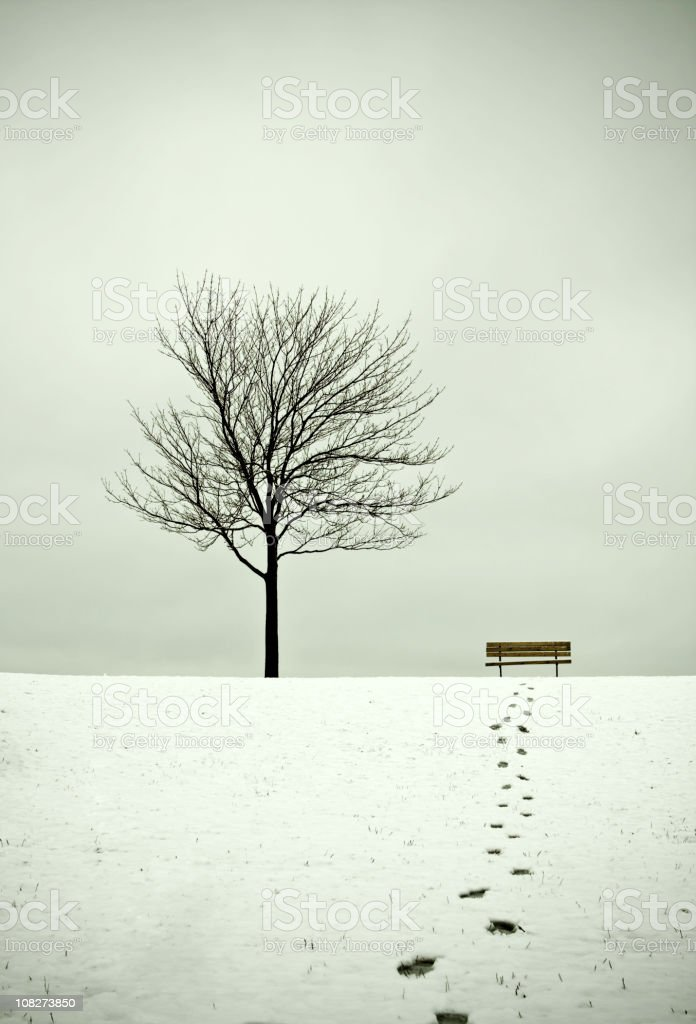 Tree and Bench in Winter with Footpath royalty-free stock photo