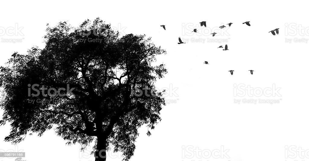 Tree and birds silhouette stock photo