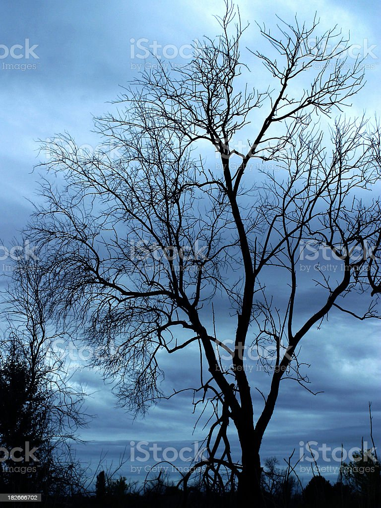 Tree and Blue royalty-free stock photo