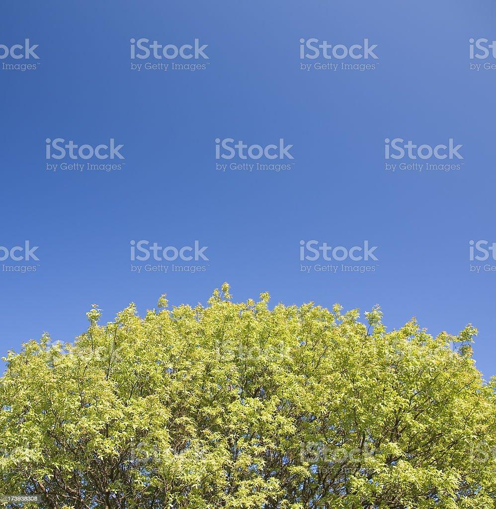 Tree and blue sky royalty-free stock photo